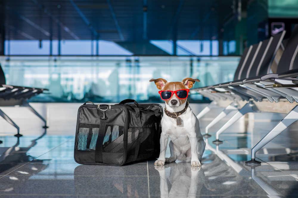 5 consejos para viajar con tu mascota en avión